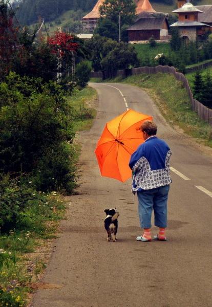 my owner has an orange umbrella by Dg