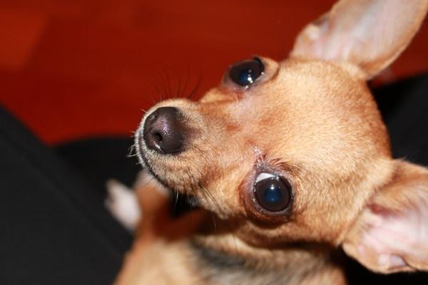 Chicita Puppy wonder by sunsetgirl