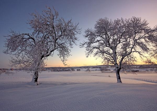 Winter's pallette