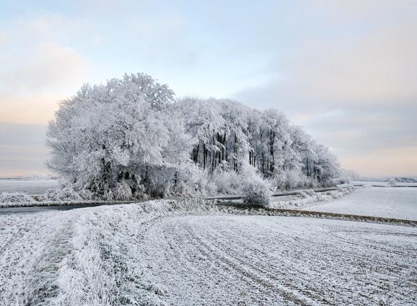 Winter Trees by rogerbryan