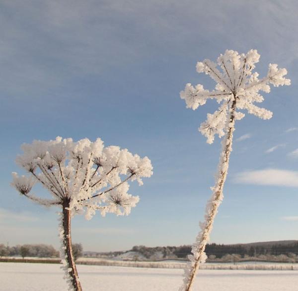 Frozen by danbrann