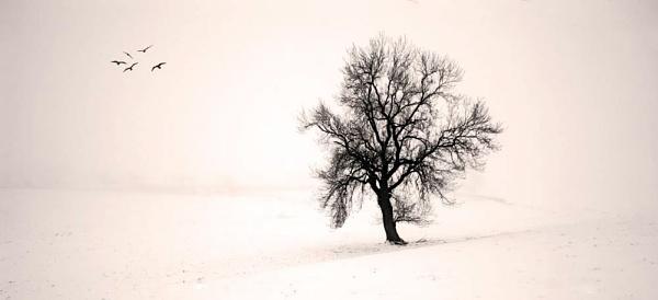 Misty Tree by TeresaH