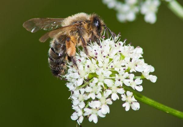 Bee Too by dersk