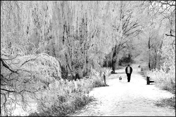 Frosty Morn by Desb