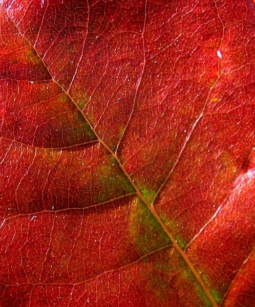 Deep Crimson by LexEquine