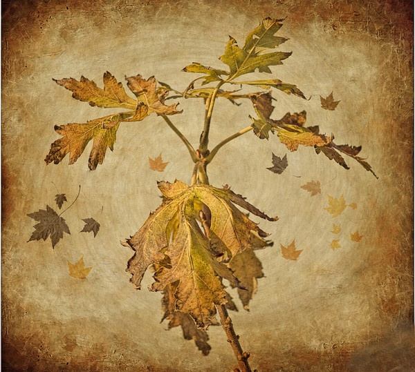Last of the leaves by Hazel
