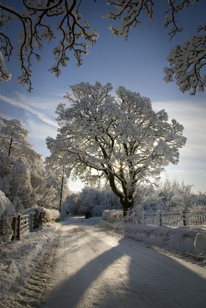Winter tree by carrot_heid