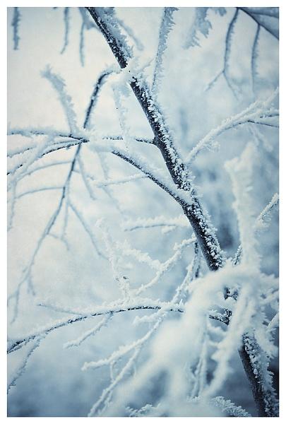 blue frost by blackbird