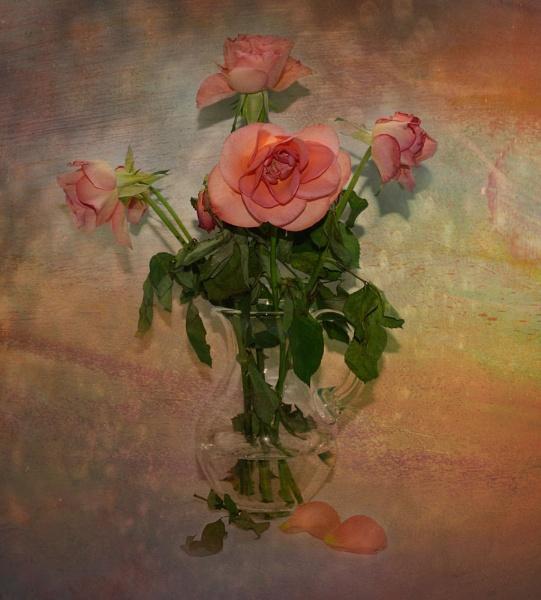 Fallen Rose Petals by Suehh