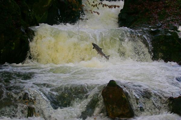 white water jumping by Kai