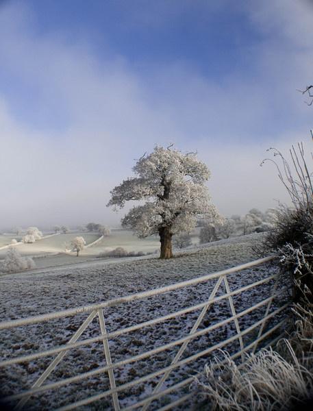 Frosty Morning by Tettie