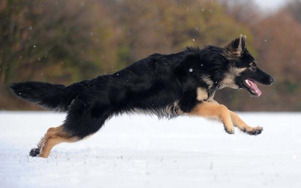 Murphy in winter by afairfull