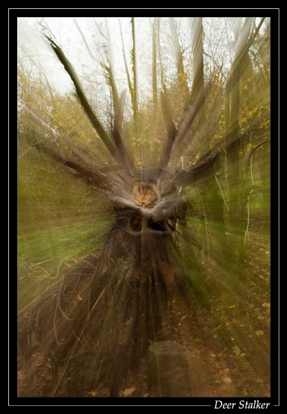 Deer Stalker by jjmorgan36