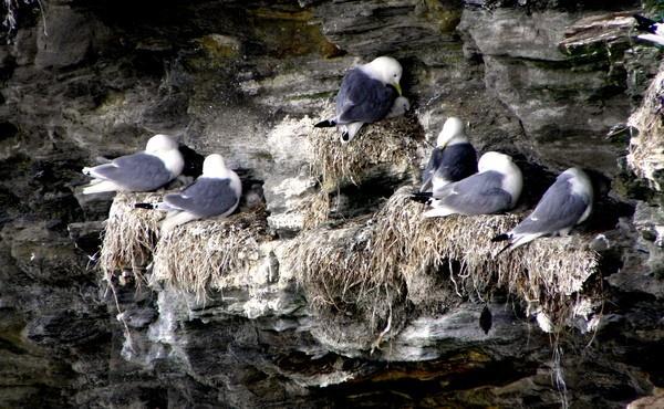 Nesting by hughsey
