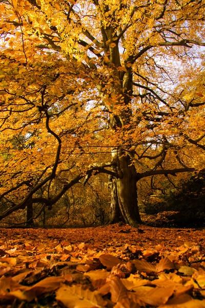 The Woods by jasonowen73