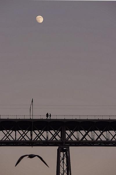 Moon watchers by Joao_Lopes