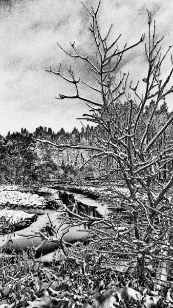 Woodcutter by mlseawell