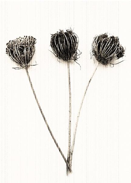 Three Graces by judidicks