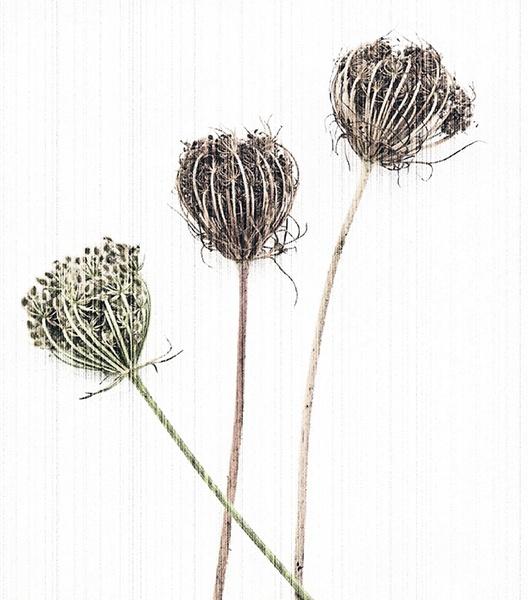 Three Graces no.2 by judidicks