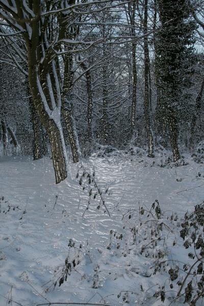 Winter Wonderland by JohnMeik