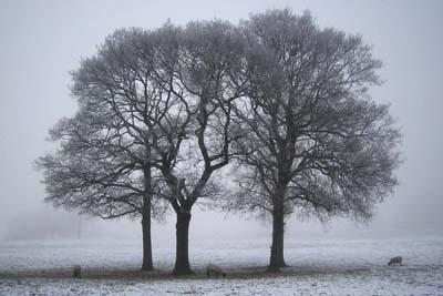 Misty Morn @ Gateford Park by Gypsyman