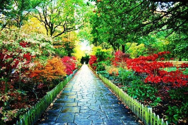Path beauty by Chinga