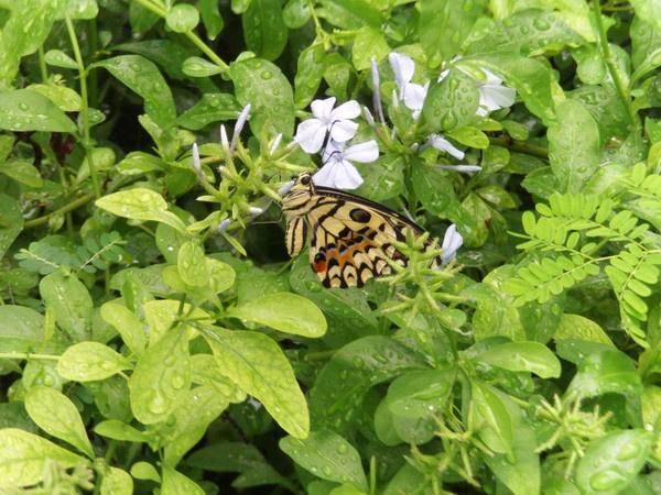 Butterfly by jane914