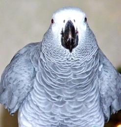 my parrot