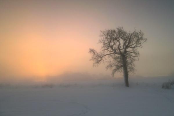 Dawn Mist by cdm36