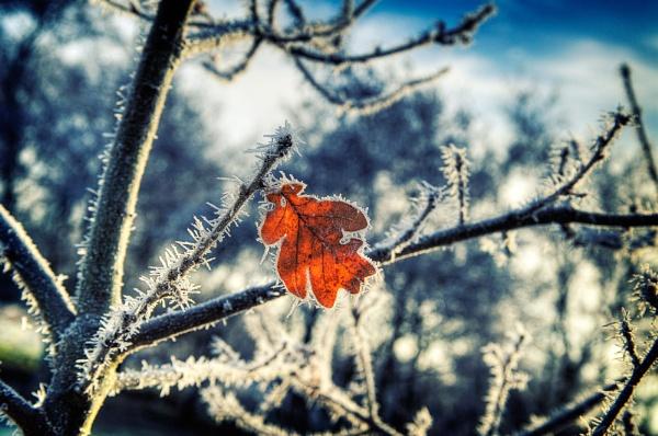 Leaf by JohnnyGraham
