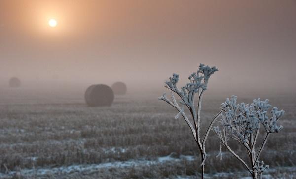 Winter Bale + Plant by Gazzten