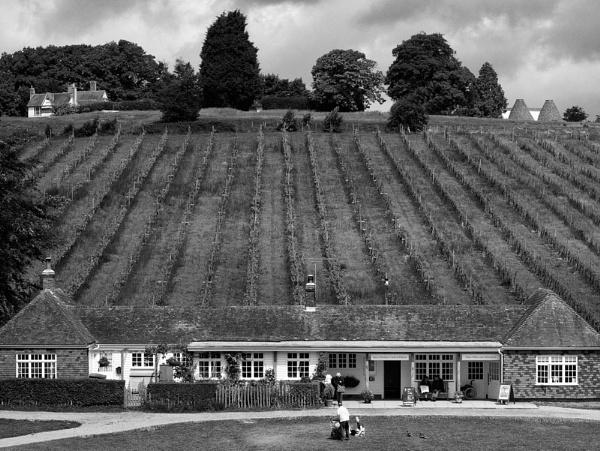 Hop Fields by Peteward