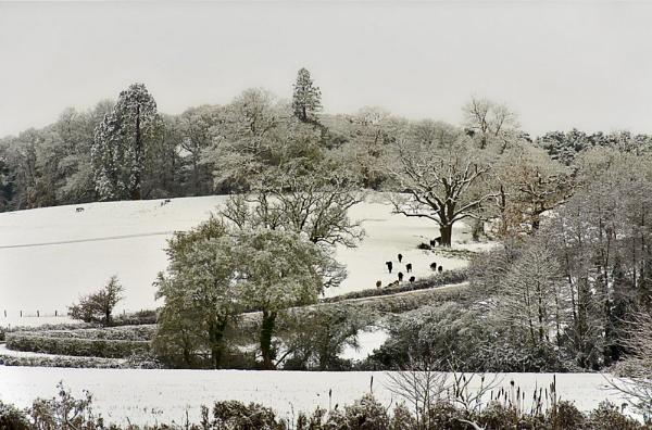 Winter Landscape by BobA