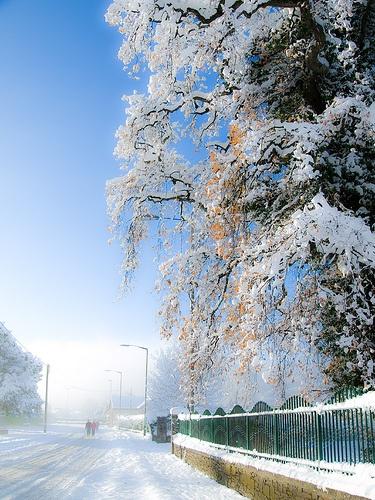 Winter Walk by Fluke