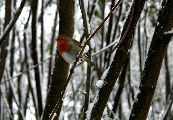 snow bird by nicbone