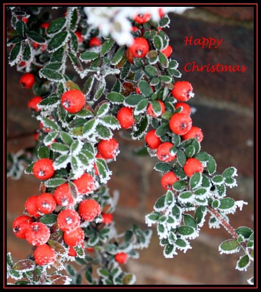 CHRISTMAS GREETINGS by EMJAYCEE