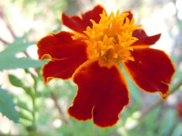 "\""contras flower\"" by sunnilkalinndi"