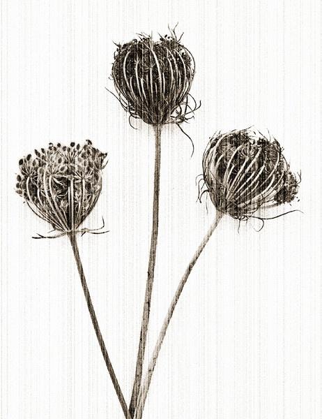 Three Graces No.3 by judidicks