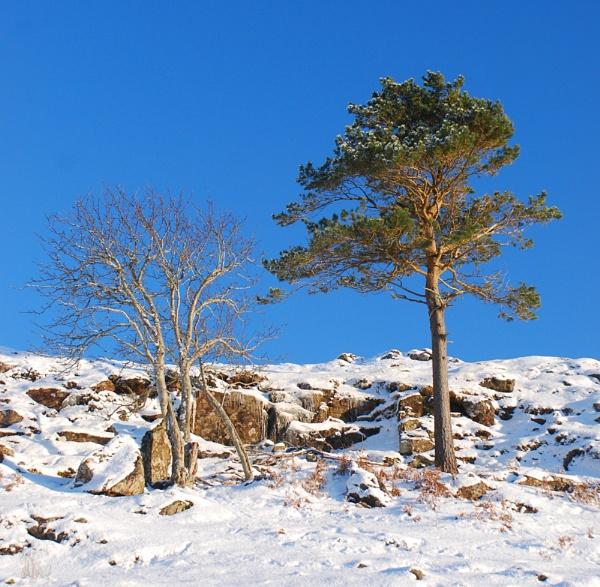 Deciduous: Evergreen coniferous by Sasanach