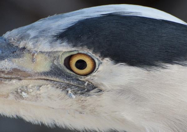 Birds Eye View by Picola