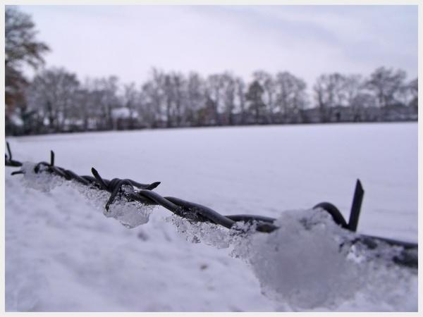 Frosty by Rach_s