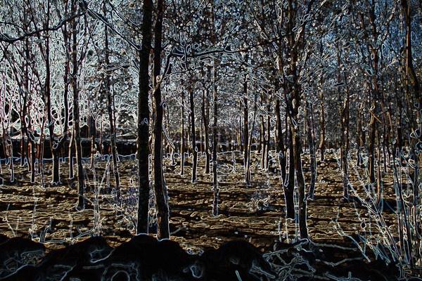 Winter Forest by JohnMeik