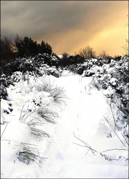 Winter wonder land by EddyG