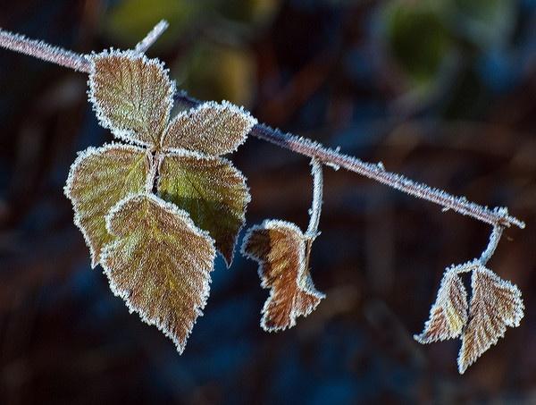 Sparkling Nature by JohnJenkins99