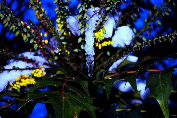 Drip Drop... by Chinga