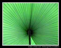 Under a -Palm Leaf