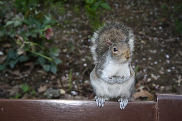 squirrel by sophie_elizabeth