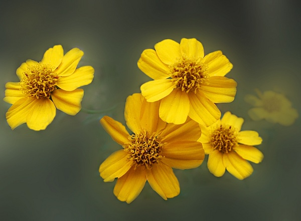 Yellow Flowers by wobblything