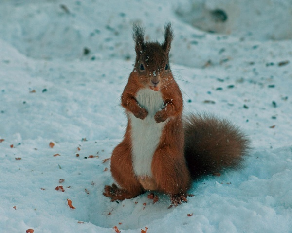 All this snow is driving me nuts by johnbushell