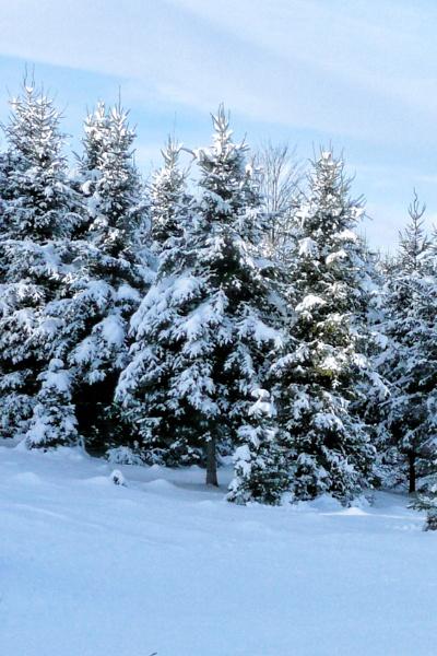 Blue Christmas by Joline